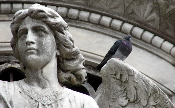 private Recoleta cemetery tour angel with pigeon