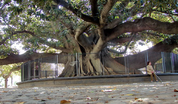 Recoleta private tours Buenos Aires the old gum tree